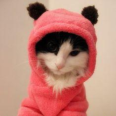 Pet fleece for Astrix :)