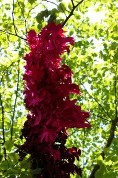 Tapijt van byNasia >> http://www.gimmii.nl/wollen-tapijten-van-bynasia.html#