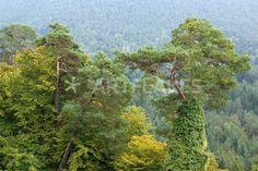"""green beauty"" von Bernd Hoyen #fotokunst #photoart #baum #bäume #tree #trees #grün #green #gelb #yellow #herbst #autumn #natur #nature #landschaft #landschaften #landscape #landscapes #deutschland #germany #pfälzerwald #palatinateforest"
