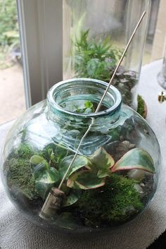 Lots of terrarium tips here. Also tips for a succulent terrarium (DIFFERENT from other plants) Terrariums Diy, Terrarium Plants, Succulent Terrarium, Succulents Garden, Garden Plants, Indoor Plants, Planting Flowers, Glass Terrarium Ideas, Hanging Plants