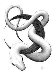 Image result for snake drawing