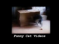 Funny Cats And Kittens Meowing Compilation 2017 || NEW -  #animals #animal #pet #cat #cats #cute #pets #animales #tagsforlikes #catlover #funnycats  Learn how to speak cat! Click HERE for the cat bible! I created this video with the YouTube Video Editor (  - #Cats