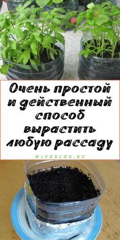 Landscape Design, Garden Design, Brick Bbq, Farm Gardens, Horticulture, Gardening Tips, Soda, Home And Garden, Plants