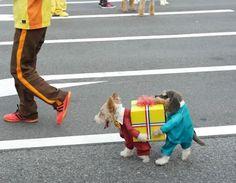 dog costume!