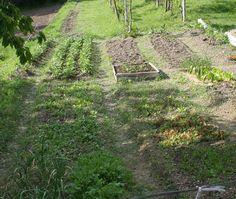 Prima e dopo: le tre facce dello stesso orto!