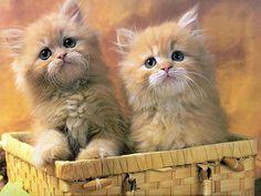 38 Cute Baby Animals