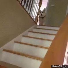 도탁스 (DOTAX) | 계단에서 굴러떨어지는 여자를 피한 남자 - Daum 카페