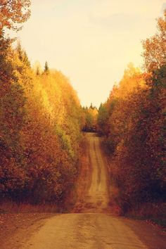 fall leaves, country roads, season, back roads, path, countri road, robert frost, dirt roads, the road