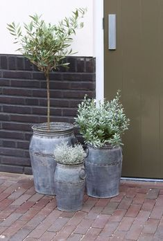 Light & Living Blumentopf S / 3 max Dahlia Antik Zink 42 x - Balcony Plants, Balcony Garden, Garden Planters, Potted Plants, Planter Pots, Dahlia, Pot Jardin, Garden Deco, Diy Pergola