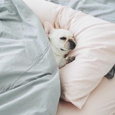 Ten more minutes. Korean Beauty Store, Snuggles, French Bulldog, Memes, Dogs, Instagram Posts, Animals, Glow, Animales