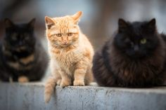 Guardian cats by Cretu Stefan Cats, Animals, Street, Gatos, Animales, Animaux, Roads, Kitty, Cat