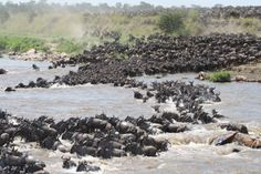 The best place to watch the great migration...