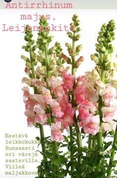 Plant Identification, Planting Flowers, Plants, Flora, Plant