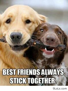Best friends - Funny Pictures, Funny Quotes, Funny Videos - 9LoLs.com