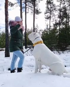 Funny Animal Videos, Cute Funny Animals, Cute Baby Animals, Amstaff Terrier, Pitbull Terrier, Terrier Mix, Huge Dogs, Giant Dogs, Cute Dogs And Puppies