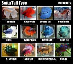 Good, agree Betta fish toys are mistaken