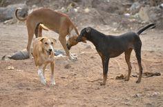 EkpoEsito.Com : Nigerian man arrested for naming his dog 'Buhari' ...