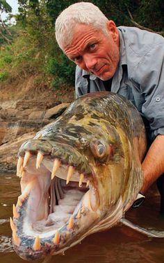 El naturalista Jeremy Wade con un pez tigre africano en un episodio de la serie Monstruos de río.