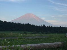 おはようございます。 毎日梅雨空の季節になりました。 でもお茶畑にとっては、貴重な天の恵みです。そんな梅雨空の晴れ間に富士山が綺麗に見えました。  詳しくは http://shizuokafujien.com/71497/?p=5&fwType=pin