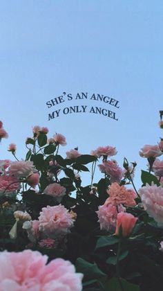 Only angel //Harry styles Tumblr Wallpaper, Flower Wallpaper, Wallpaper Quotes, Wallpaper Backgrounds, Aesthetic Roses, Quote Aesthetic, Blue Aesthetic, Aesthetic Vintage, Aesthetic Photo