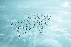 birds on sky growth development business team work concept art abstract nature background