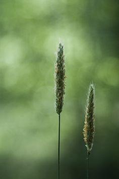 ♂ Plants bokeh photography
