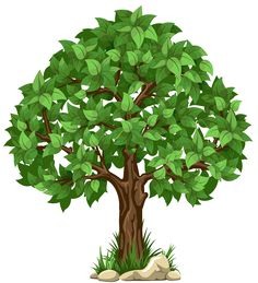 Transparent Tree PNG Clipart Picture