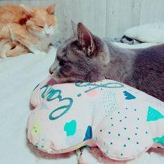 .。*・゚゚ newクッション 妹から猫達へのプレゼント ありがとう  #お気に入り#かわいい#クッション#名前はチビとさく#愛猫#猫#ねこ#ネコ#にゃんこ#Cats#猫部屋#猫多頭飼い#猫7匹#猫のいる暮らし#猫と暮らす#猫達との生活#ネコスタグラム#ねこすたぐらむ#ニャンスタグラム#にゃんすたぐらむ#catstagram#にゃんだふるらいふ#猫部#ふわもこ部#猫好きさんと繋がりたい#猫大好き#やっぱり猫が好き