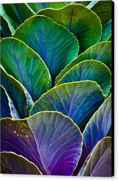 Colorfully organic art for your walls! 'Colors Of The Cabbage Patch' by Christi Kraft   Available in classic stretched canvas prints, sleek metal prints, modern acrylic prints, and elegant framed prints.