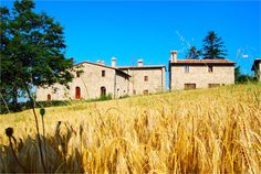 """Albicocco is a charming two bedroom villa set amid the stunning Tuscan landscape in Italy. This rustic style villa is located at Il Poderone, a restored hilltop farming estate or """"Borgo"""" with breath-taking views of the surrounding hills. Albicocco situated on the corner of a large building which was once a farm house, built over 500 years ago. The villa comes with a shared swimming pool offering wonderful views of the surrounding hills and valleys dotted with prestigious villas & quaint towns. Italian Houses, Hills And Valleys, Luxury Villa Rentals, House Built, Rental Property, Rustic Style, Farm House, Swimming Pools, Building A House"""