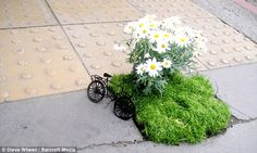 Guerilla Gardener leaves pothole surprises (tiny gardens) as a random act of kindness to strangers.