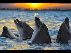 Golfinhos lindos