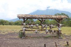 Taman Nasional Baluran Savana Bekol Situbondo