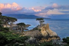 Only The Lonely - Monterey Cypress    Standing like a sentinel, battered and pounded by Pacific storms as they move eastward across California the Lone Cypress was once part of a large forest of Monterey cypress trees which lined the coast of central California but are now limited to two small groves near Monterey and Carmel.    This famous 250 year old icon of California