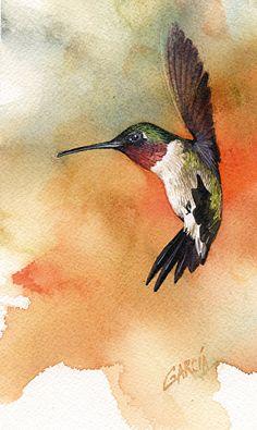 Fancy Flyer, Ruby-throated Hummingbird by Joe Garcia Watercolor