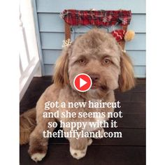 Dog with a human face is quite funny. It looks like she felt so hatred and helpless with the new image. Share this cute dog with a human face video with your. Funny Dog Videos, Funny Dogs, New Haircuts, Hilarious, Happy, Youtube, Animals, Animales, Fresh Haircuts