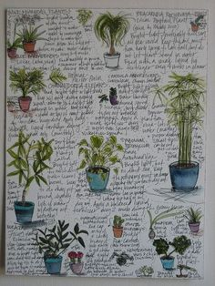 + M's Houseplants GARDENING TIPS :: Keep a houseplant log. Good idea to jot down notes & sketch pictures to keep track of your plants' names & needs.