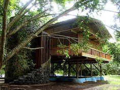 Idea for Building... bamboo home on stilts