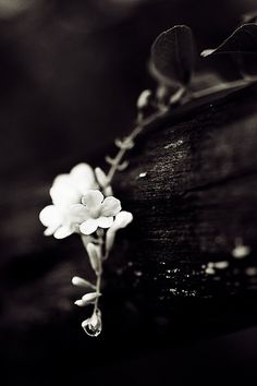 #whiteflowers #champagne