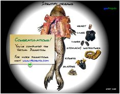 Virtual Dissection! Great idea for Zoology and Anatomy
