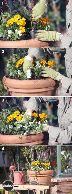 Here are the steps for how to keep a large potted flower or container garden healthy.