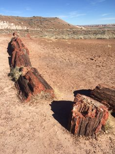 Petrified Wood in the Petrified Forest National Park, Arizona. Petrified Forest National Park, Best Campgrounds, Petrified Wood, Grand Canyon, Arizona, National Parks, America, Pictures, Travel