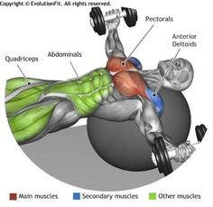 CHEST - DUMBBELL FLYES ON STABILITY BALL