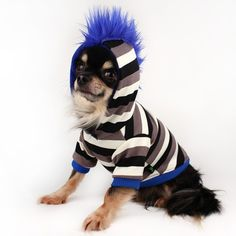 """New styles for the new year! #petitdogapparel on #etsy #chihuahuaclothes #mohawk #stripes #kingtutchihuahua"""