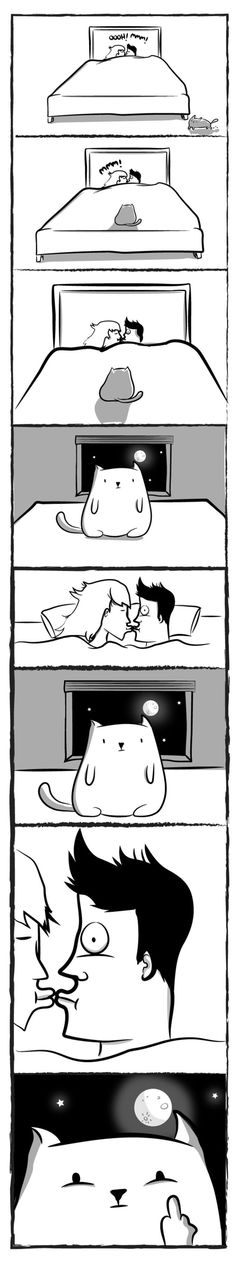 Emily Mishina Emheana Na Pinterestu - 18 hilarious comics that are all too true for cat owners