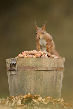 """I'm going nuts!!""   [Photographer Edwin Kats - March 2012]'h4d'121103"