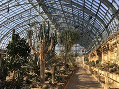 A Walk in the Park: Garfield Park Conservatory Garfield Park Conservatory, Spring Is Coming, Houseplants, Container Gardening, Around The Worlds, Walking, Urban, Explore, Travel