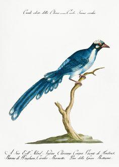 how do html color codes work Vintage Birds, Vintage Images, Vintage Bird Illustration, Birds Of America, John James Audubon, Classical Art, Exotic Birds, Free Illustrations, Antique Art