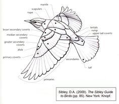 이미지 출처 http://www.creativecrash.com/system/photos/000/255/789/255789/big/BirdWingDiagram.jpg