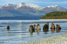 Sea lions enjoying a sunny day at the Beagle Channel, Chile - Atamacaphoto.com